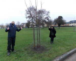 Trees Planted on Gooshays Green